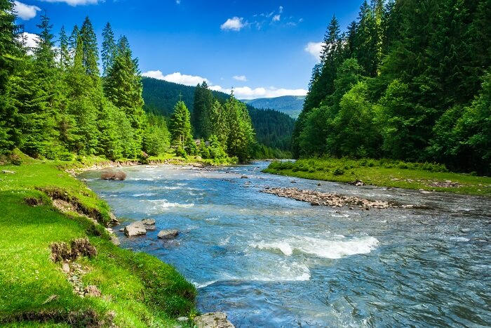 Beautiful river flowing through a forest.